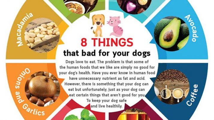 8 Things that bad for your dogs