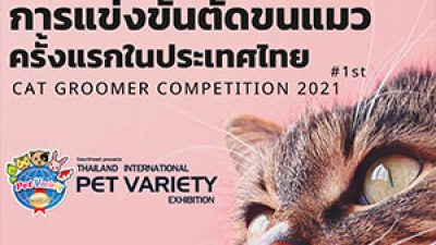 Cat Groomer Competition 2021